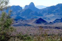 Palm Canyon – Kofa National Wildlife Refuge – Arizona – December 2017
