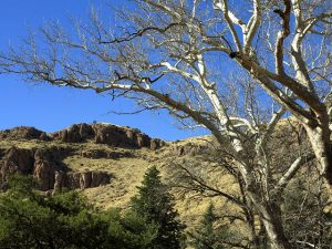 Chiricahua National Monument – Winter Journey – March 2018