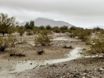 Rain in the Desert – January 2019