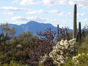 Cacti Forest – February 2019