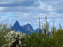 A Very Cholla & Saguaro Day – February 2019