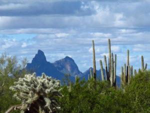 A Very Cholla & Saguaro Day – February 2019