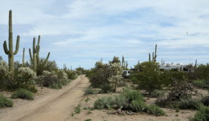 More Cacti Forest – February 2019