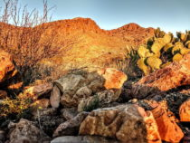 Cochise Stronghold to Rock Hound – March 2019