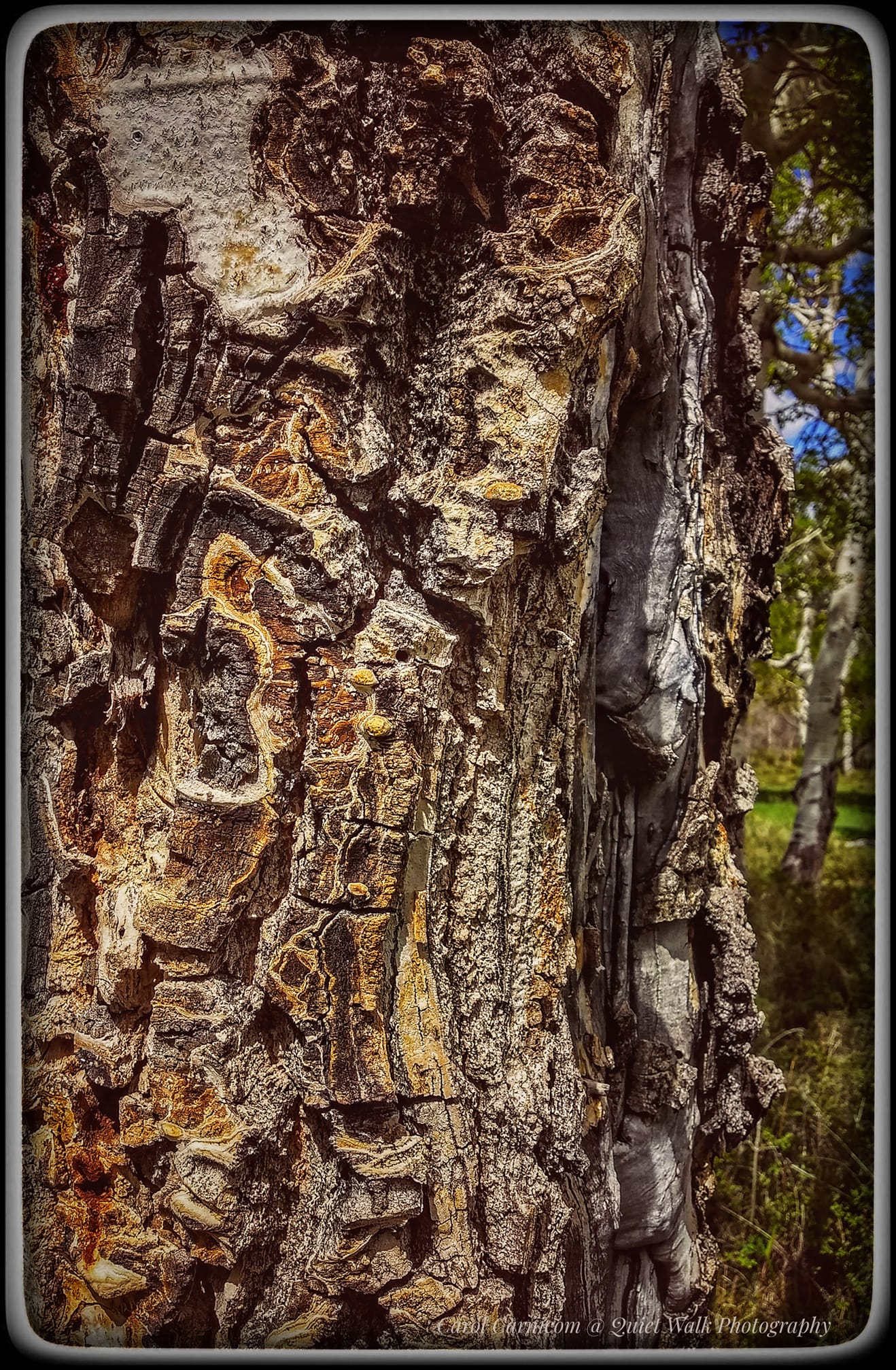 #highervibration Day 217 - Life is a mosaic, as this tree knows, not resisting but just doing its tree thing, day after day. Trees are good teachers.... Have you noticed?