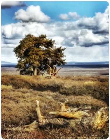 #highervibration Day 156 - The lone tree stands tall and strong on the cinder cone mountain, looking out to the vast desert basin, undisturbed by stormy weather. Might I stand like the tree regardless of what swirls about me.