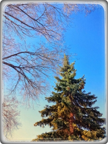 #highervibration Day 192 - The trees dance for joy at the rising of the sun and a great blue sky after many cloudy days.... and so do I!