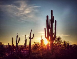 Cactus Forest Days – Arizona – January 2020