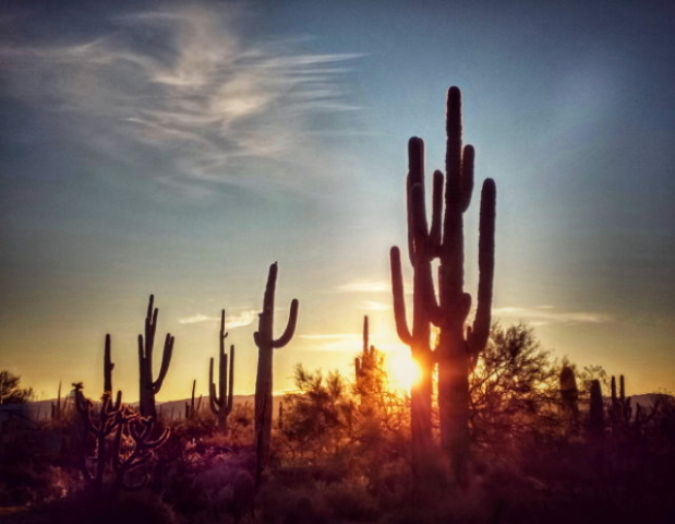 #highervibration Day 97 - Following a desert muse, captivated by the stately beings who reside here, I am mesmerized as the dawn becomes sunrise.