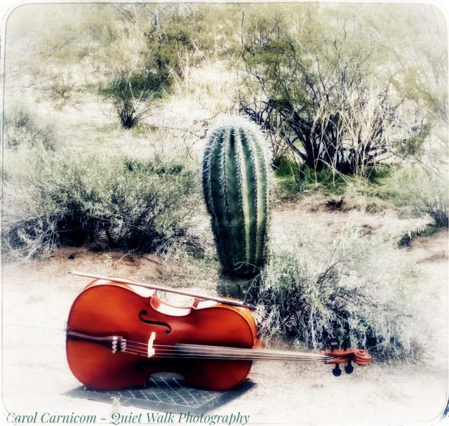 Day 94 - #highervibration A little cello and a young saguaro getting acquainted in the desert. Maybe they'll even do a little happy desert dance together...