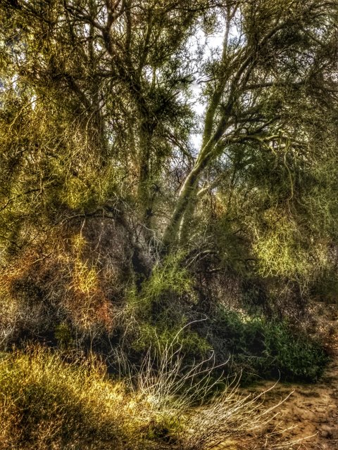 #highervibration Day 104 -  In the heart of the desert are places lush as a jungle, fulfilling their niches in life without pretense or fanfare. Some people are like that.