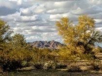 Roadrunner – Arizona – January 2020