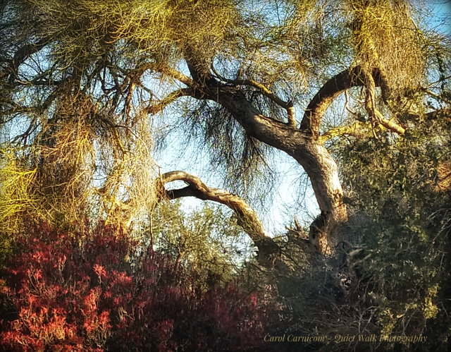 #highervibration Day 142 - I almost forgot to sing when I visited my desert friends this morning, being so caught up in awe of their beauty and presence. Image may contain: tree, sky, plant, outdoor and nature