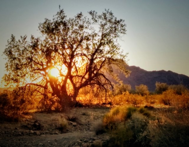 #highervibration Day 116 -  I am drawn to sunrise, to trees and mountains, to rivers and streams.... My soul is nourished as I walk in their presence.