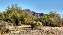 LaPosa South – Arizona – February 2020