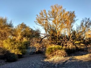 Desert Days – Arizona – February 2020