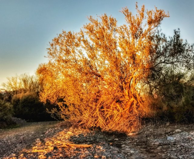 #highervibration Day 122 - The rising sun gets carried away with its palette of gold and copper, a very colorful start to the morning happy dance! Who can resist joining in!