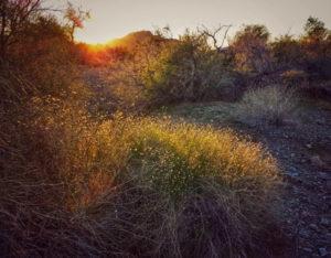 Desert Days – February 2020