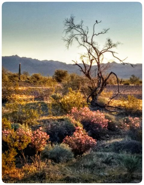 #highervibration Day 136 - A solitary bird adds his song to the morning singing of the flowers, a colorful chorus signaling the coming of spring to the desert.