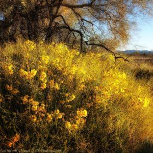 Serenity in the Desert – Arizona – February 2020