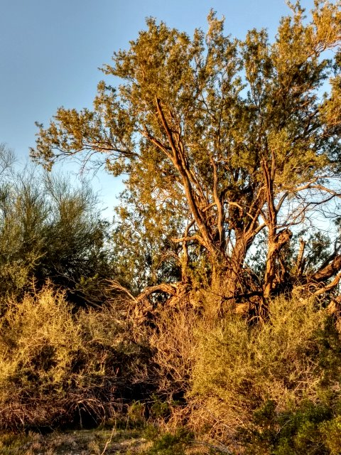 #highervibration Day 144 - The rising sun, the breeze, and the trees join hands and the morning dance begins. Will I join them? Yes, I think I will do just that!