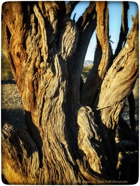 #highervibration Day 125 - #highervibration The beauty of a tree changes as she ages, but she is still beautiful none-the-less. I would like to see myself as I see trees.