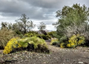 Rain in the Desert – March 2020