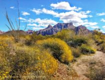 Palm Canyon – Arizona – March 2020