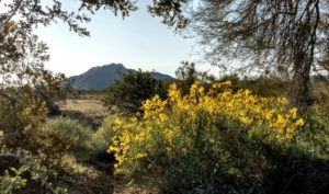 Desert Opulence  – March 2020