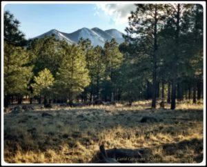LaPosa South to Flagstaff – April 2020