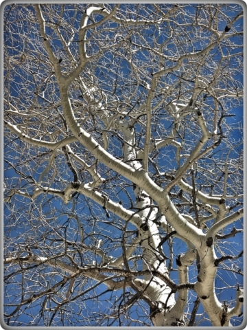 #highervibration Day 178 - No flowers here to sing a morning song, but the trees, still in winter nakedness, dance most joyfully.
