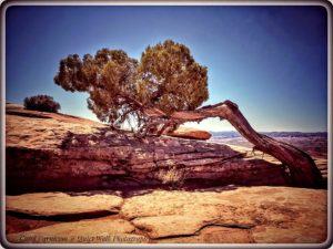 Abajo Picnic and Needles Overlook – April 2020