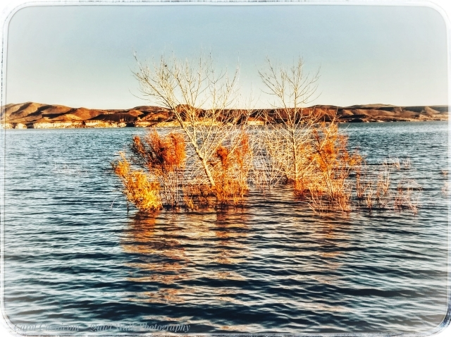 #highervibration Day 99 - Dancing at Elephant Butte, they say the water is fine.  Let's go join them for a little morning happy dance.