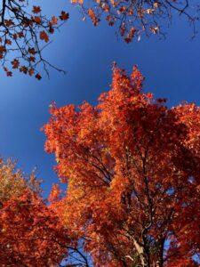 Autumn on Abajo – October 2020